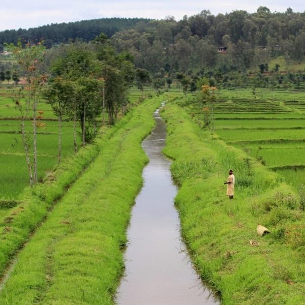Полиэтиленовые пакеты в Руанде больше не производятся